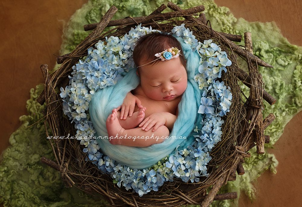 Dsc2836 newborn photography propsnewborn