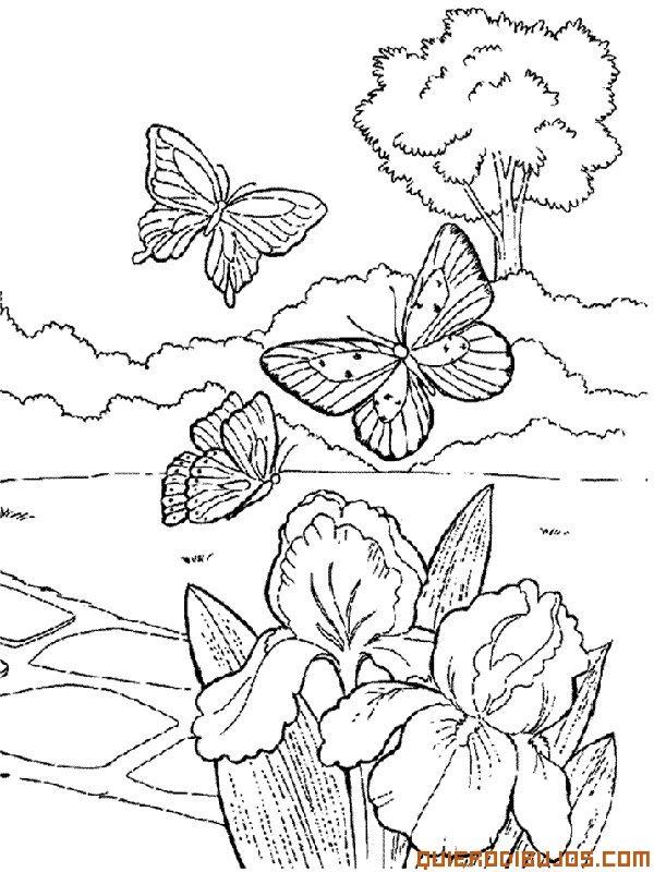 Paisaje con mariposas | Dibujos Para Colorear | Mariposas ...