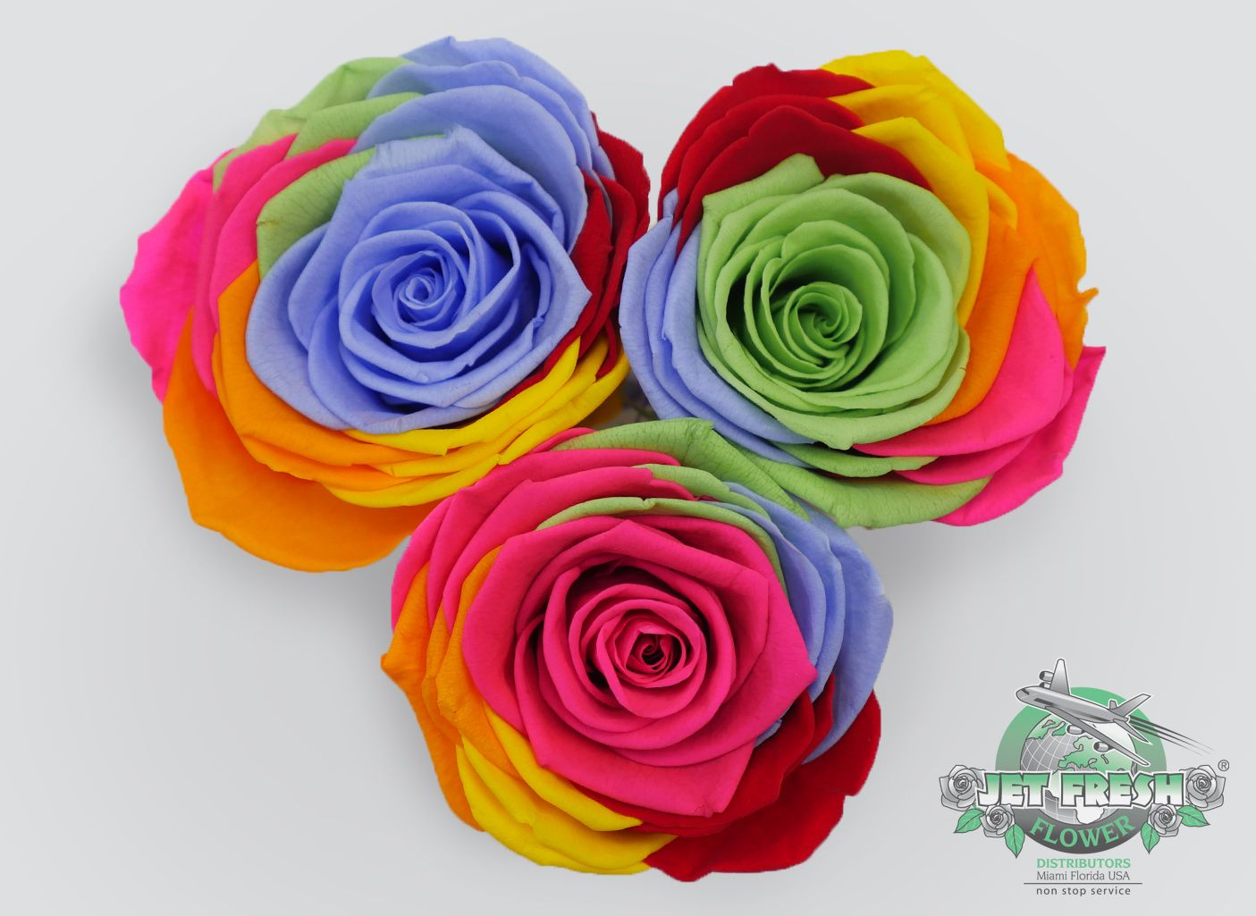 Rainbow Preserved Roses Are Available Now In Diffe Color Combinations Contact Jet Fresh