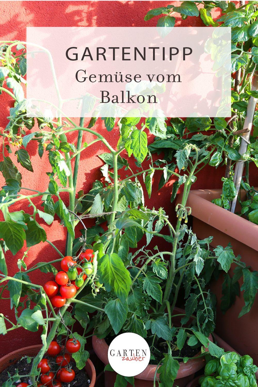 Gemuse Vom Balkon Gartenzauber In 2020 Frisches Obst Und Gemuse Garten Gartentipps
