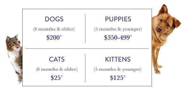 Fees And Requirements For Adopting Dogs And Cats