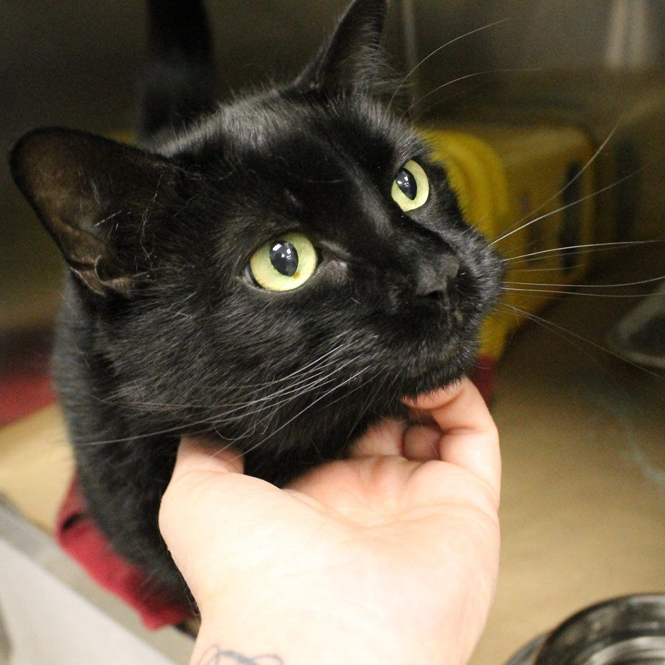 Intake 5 23available Now Name Jack Animal Id 35437558breed Dshsex Spayed Femaleest Age 8 Yrs Est Weight 15 Lbshealth Temperamen Animals Spay Adoption