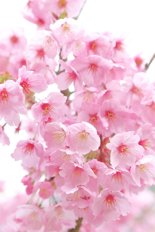 44bf0d28f2fbd4c63953956f0663feae Luxe De Fleurs De Jardin Des Idées