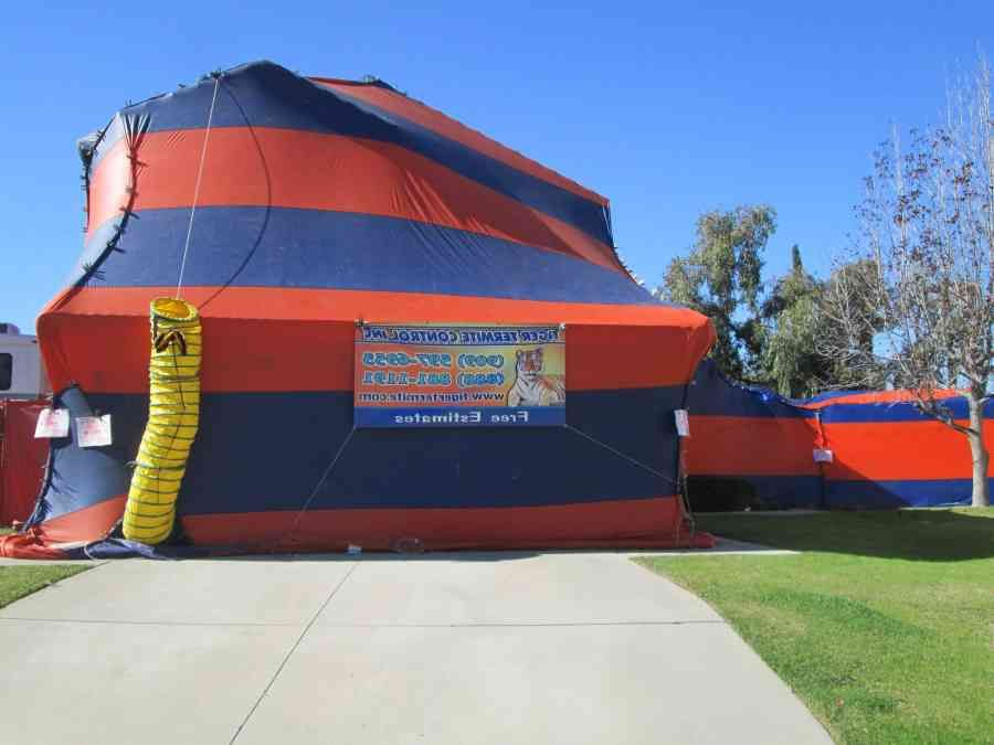 cost of tent fumigation for termites tulum smsender co & cost of tent fumigation for termites tulum smsender co | Tent ...