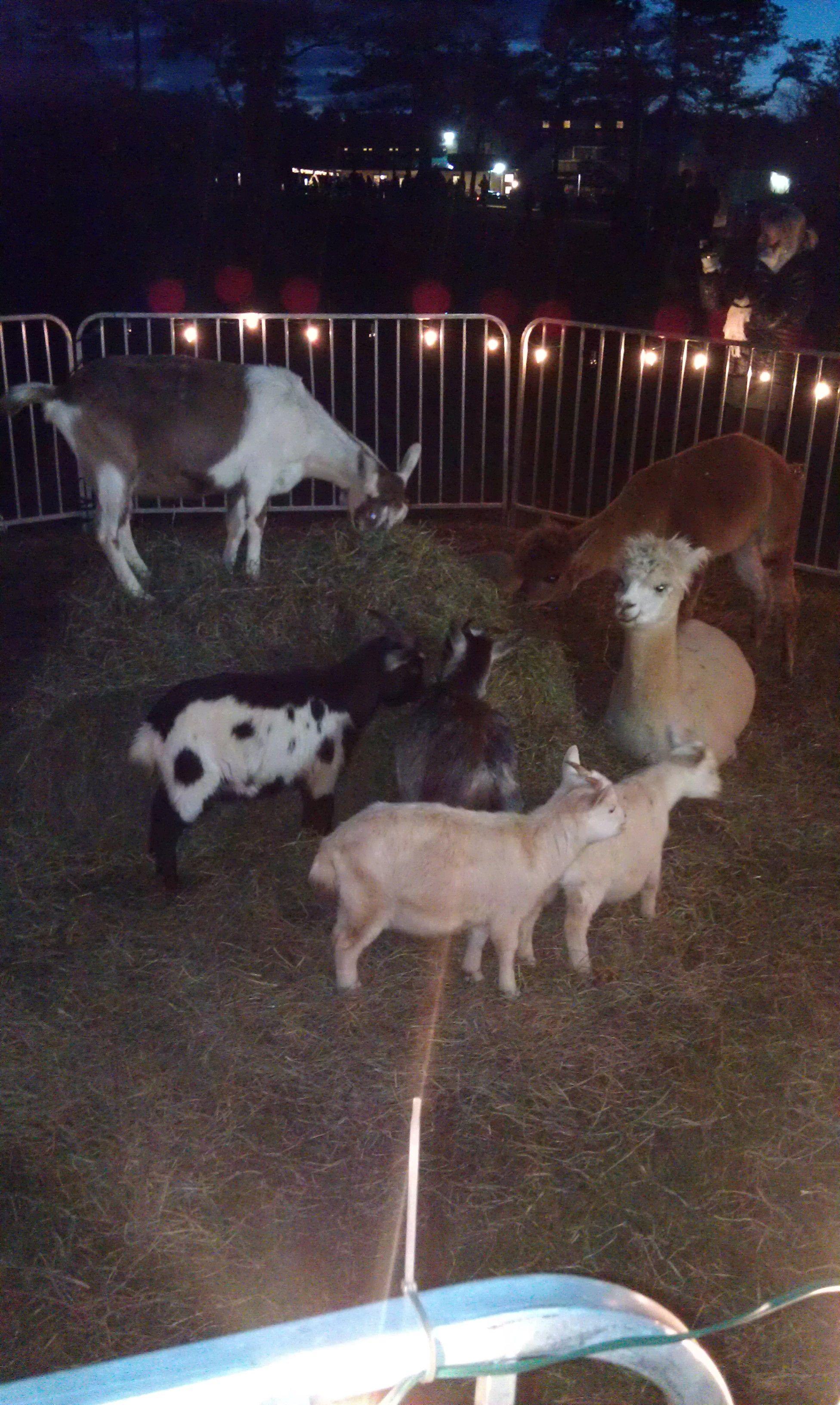 Day Night Worksheet Animals Animals