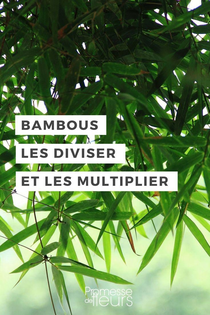 Quand Et Comment Tailler Une Passiflore comment diviser et multiplier vos bambous ? | bambous jardin
