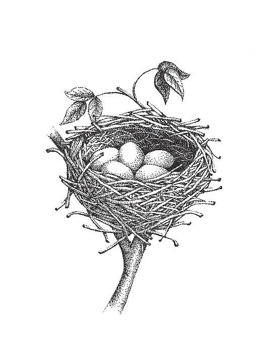 Bird Nest Bird Drawings Bird Nest Painting Nest Art