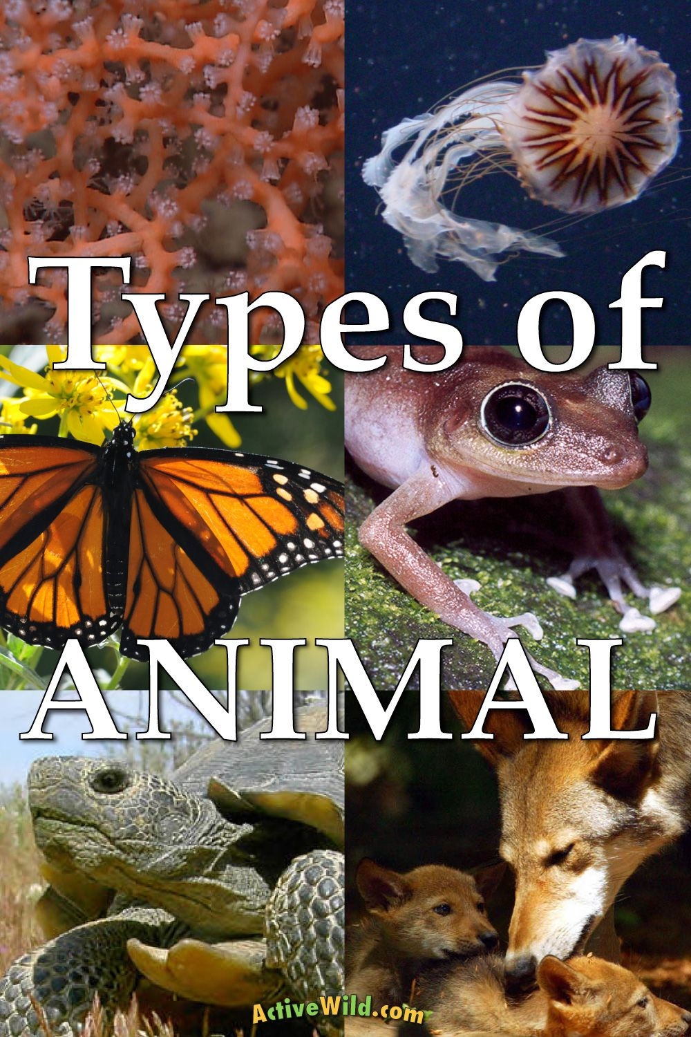 A List Of Different Types Of Animals With Pictures & Facts