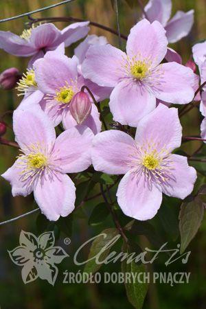 Letnie Kwiaty Co Kwitnie W Sierpniu Zielony Ogrodek