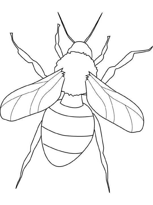 insect coloring pages 10 - Insect Coloring Pages