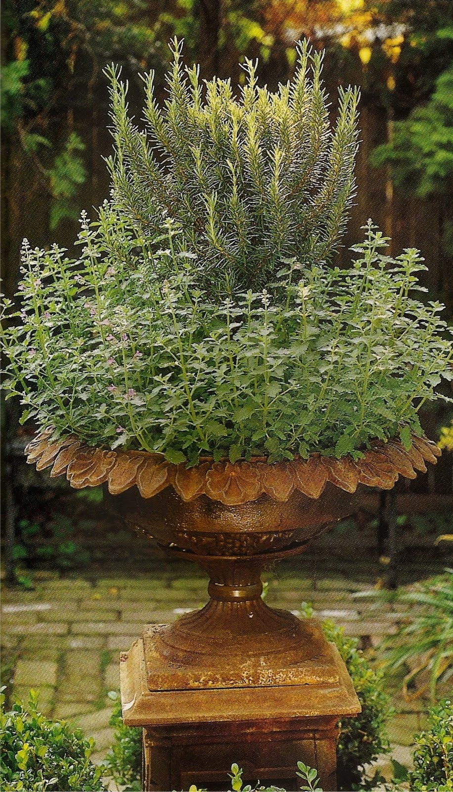 Herbage // Great Gardens & Ideas // | Flowers and Pots | Pinterest ...