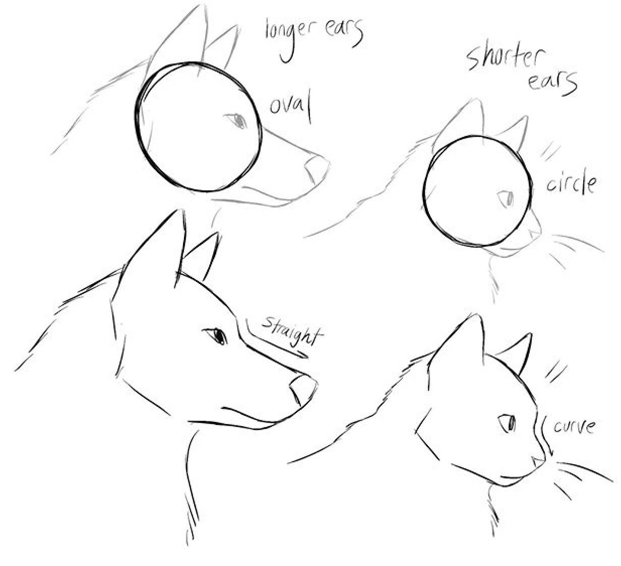 Comparacion Perfil De Gatos Vs Perro Cat Drawing Tutorial Animal Drawings Art Drawings