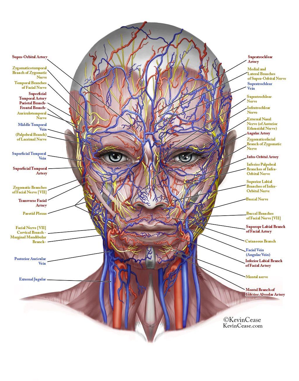 Anatomy Archives