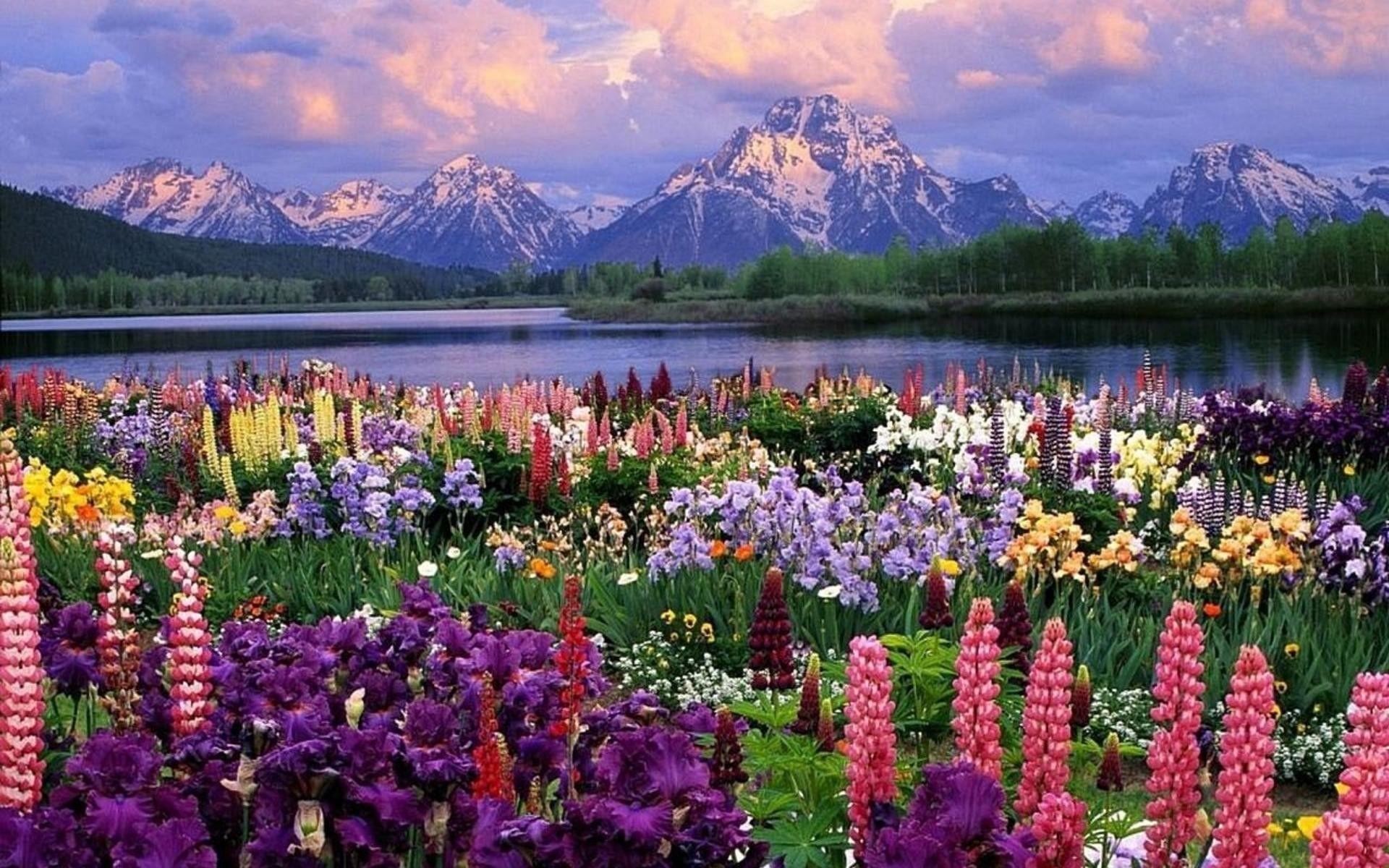 Lovely Free Screensavers Spring Scenes In 2020 Spring Desktop Wallpaper Spring Wallpaper Beautiful Flowers Hd Wallpapers