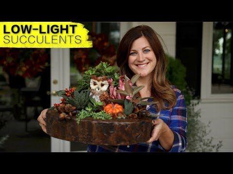 1 Low Light Succulent Arrangement Full Version Garden Answer