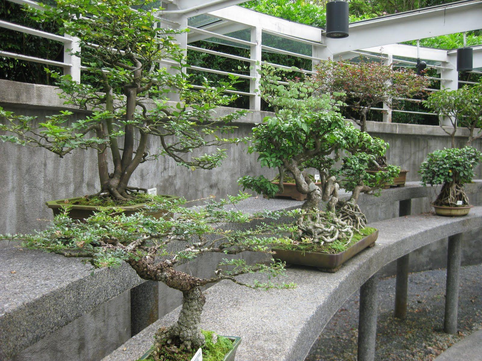 Bonsai garden bonsai pinterest bonsai and gardens