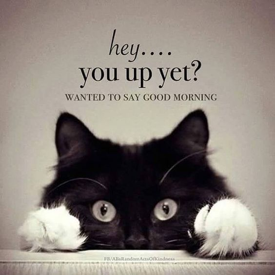 Start Your Day Off Reading Positive Quotes To Give Yourself An Advantage On Your Da Morning Quotes Funny Good Morning Beautiful Quotes Funny Good Morning Memes