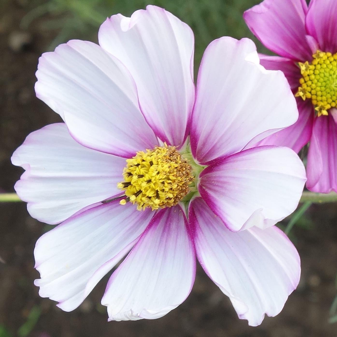 Flores. #flors #flores #flowers #ig_flors #shin_nature #shin_flors #shin_flores #shin_flowers #ig_flores #ig_nature #ig_flowers #naturaleza #nature #flower_igers #natura #nature #flowerstagram #flowersgram