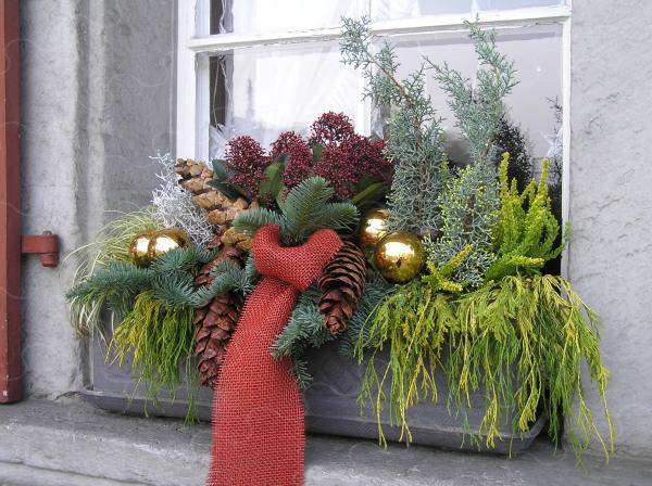advent plants chopard flowers florist fleuropservice nursery ins xmas. Black Bedroom Furniture Sets. Home Design Ideas