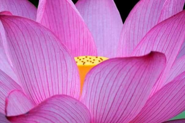 Nascita (с изображениями)   Цветы
