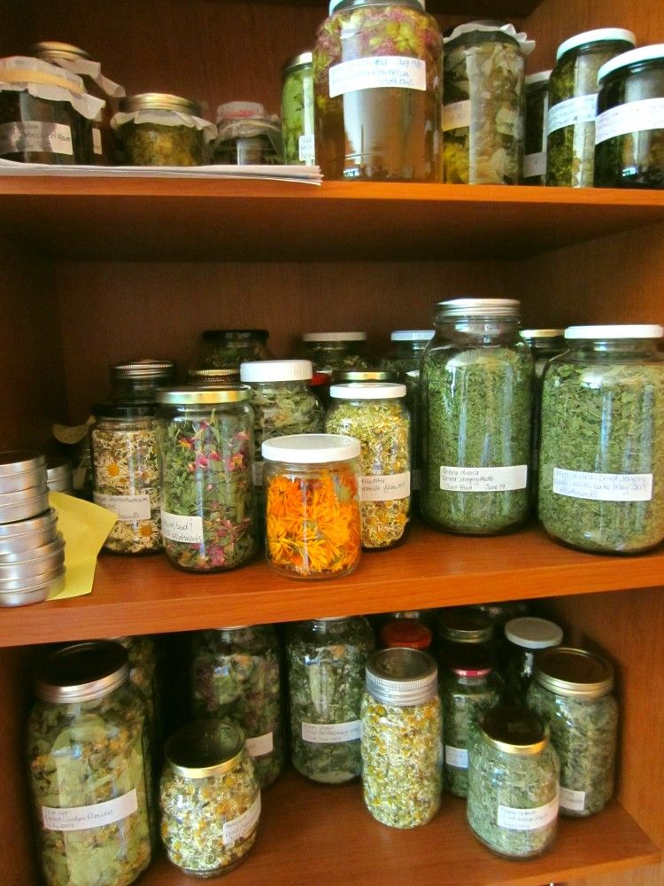 beautiful herb pantry, the wild garden (With images