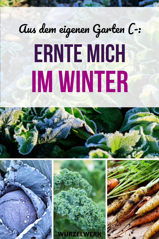 Ernte mich im Winter – frisches Gartengemüse rund ums Jahr! - Wurzelwerk