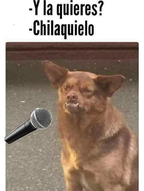 44c51f88f00781e71a7ca2ca99e3debc 20 memes que prueban que el perro chilaquil se robó nuestros
