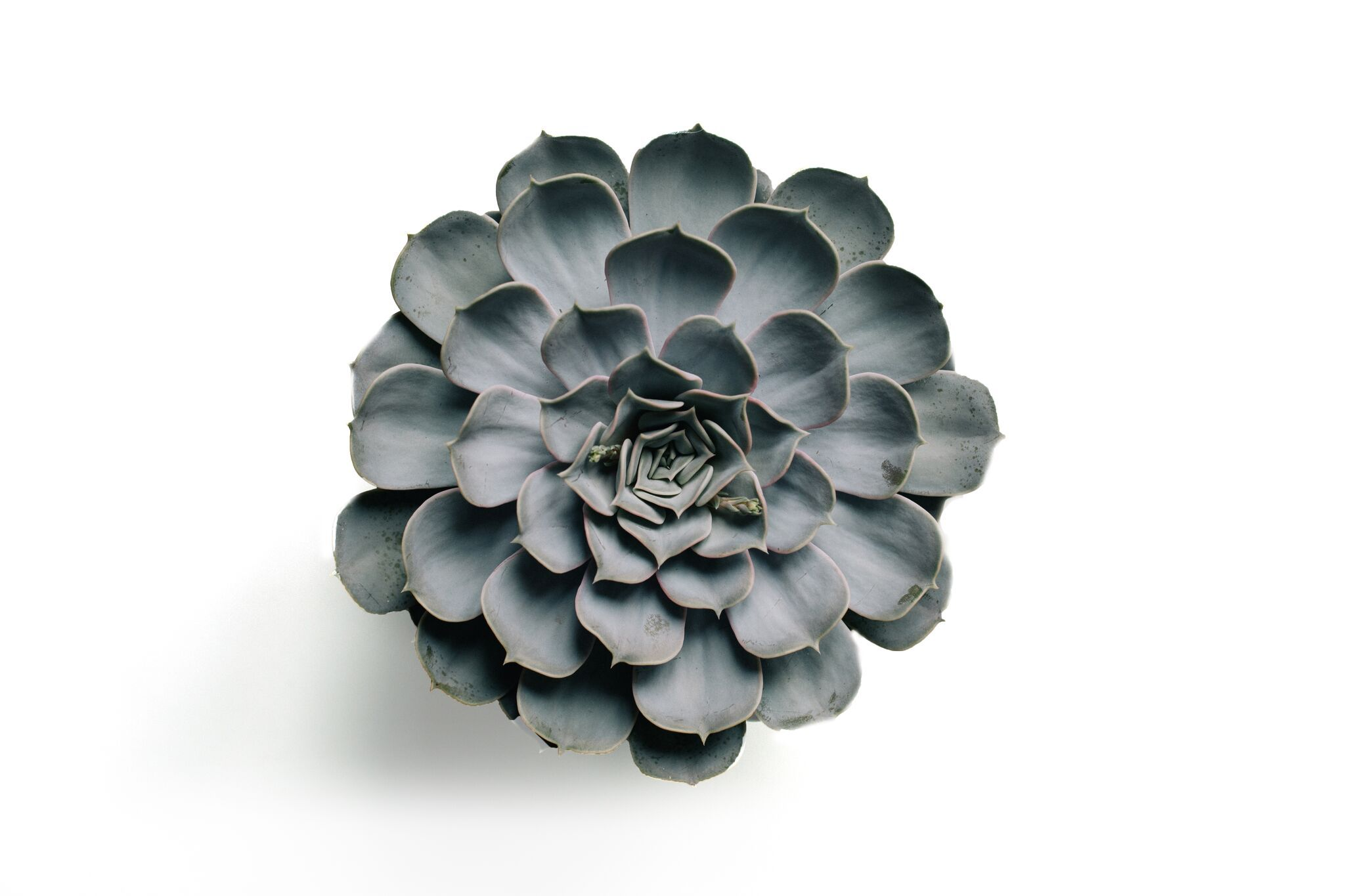 Our 5 favorite types of succulents