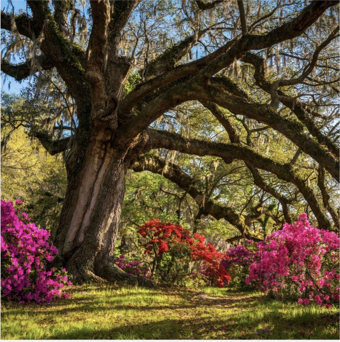 44c560014d858855c940afb9dbe7889d - Magnolia Plantation And Gardens Savannah Ga