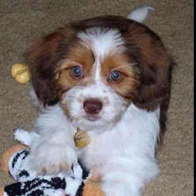 Schweenie Schweenie Dog Photos Dog Design