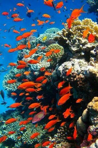 Poissons Rouges Photos De L Ocean Paysage Sous Marin Art Des Animaux Sauvages