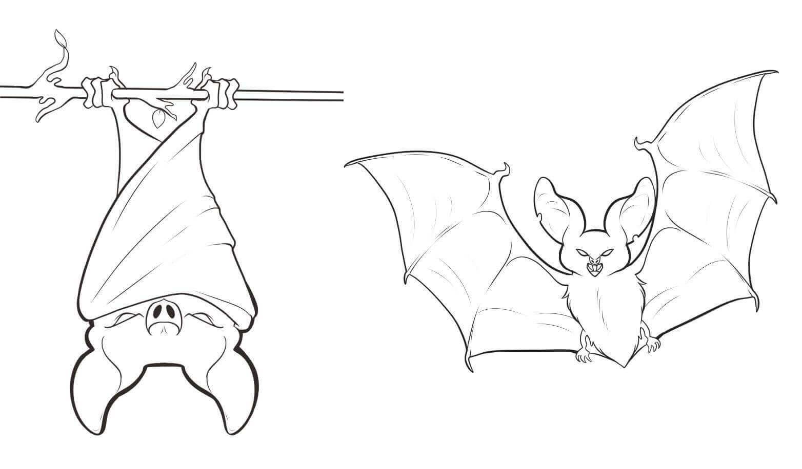 Bat Hanging Upside Down Coloring Page Bat Coloring Pages Bat