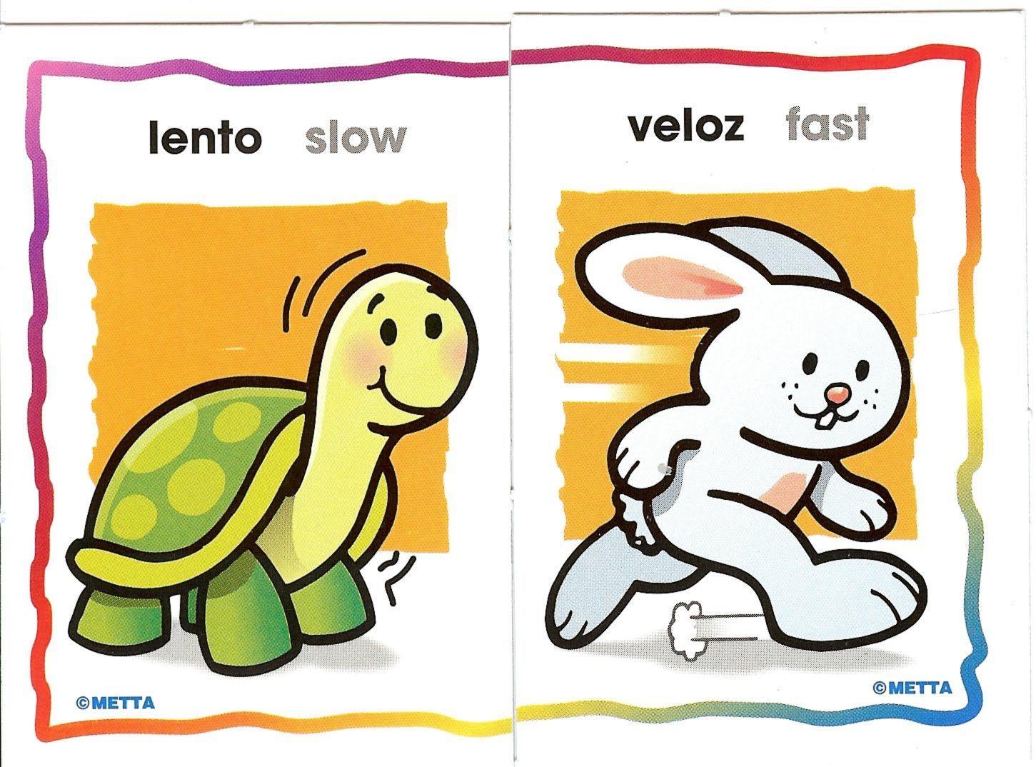 Heel Veel Kaarten Over Het Tegenovergestelde Vocabulario