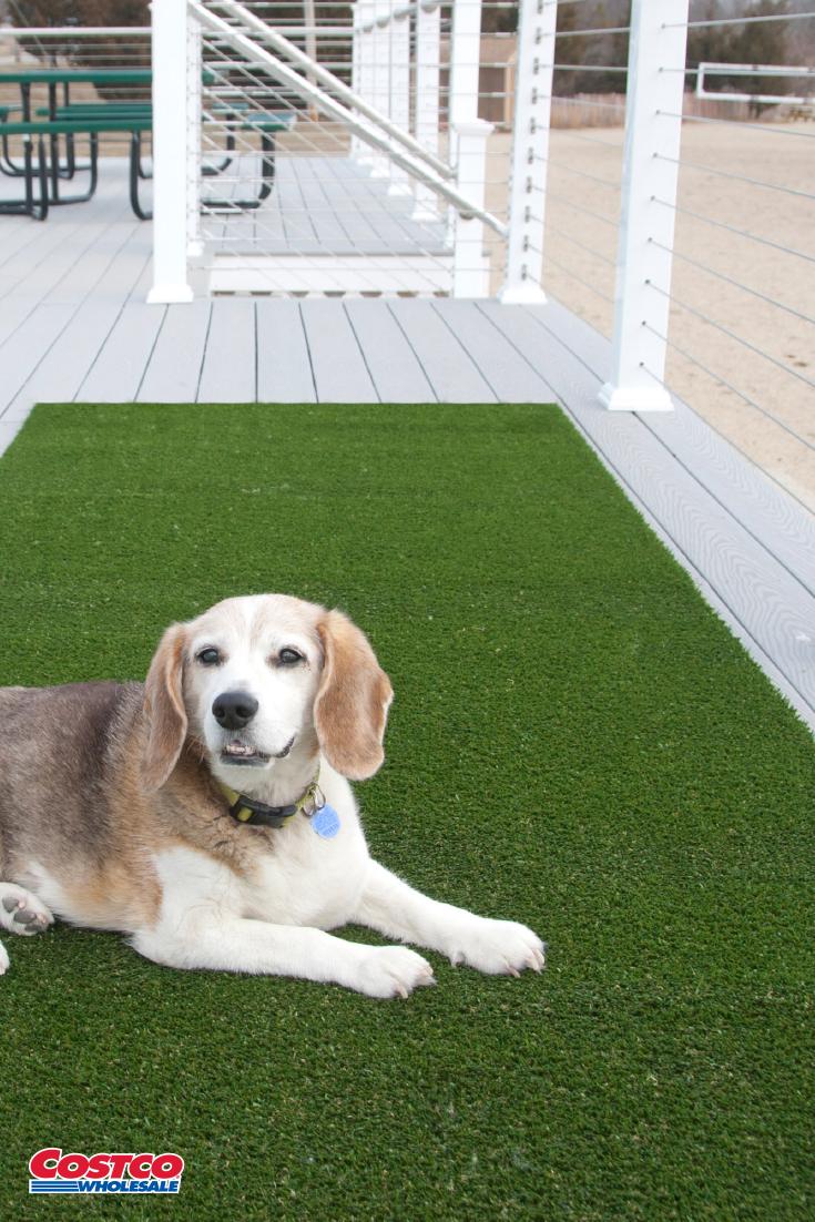 Pregra Artificial Pet Turf Pet Turf Artificial Grass Artificial Turf
