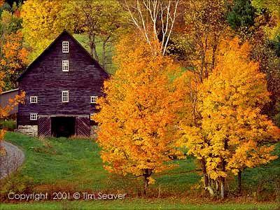 Vermont Barn and Sugar Maples [photo: Tim Seaver]