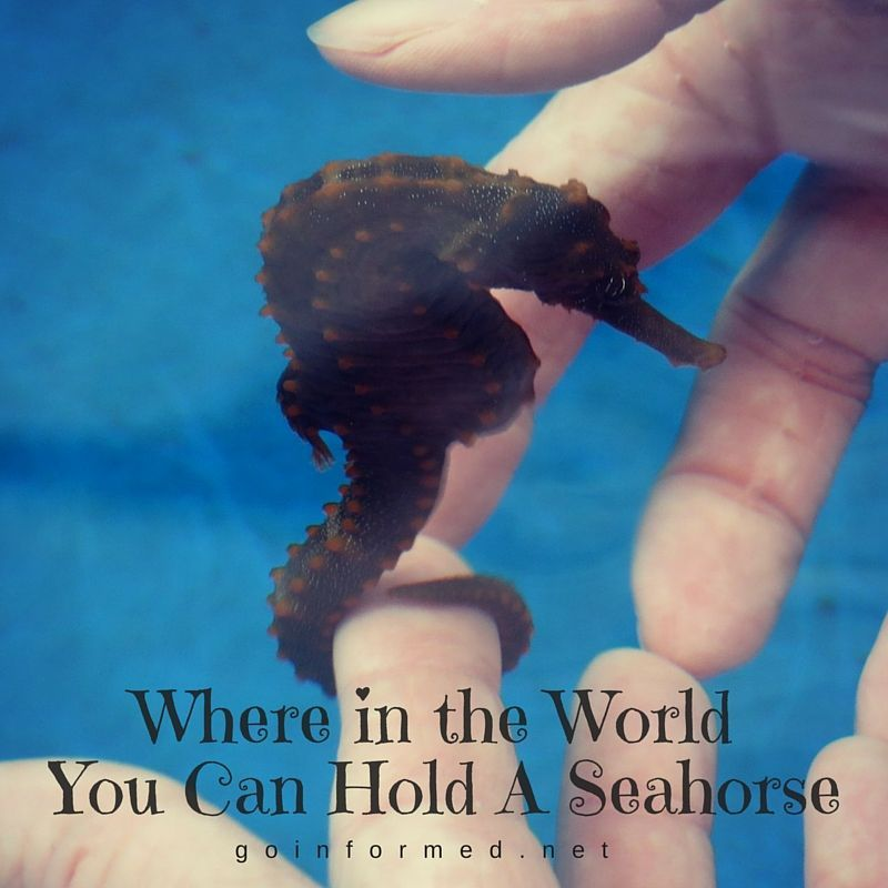 Giddy Up! Exploring the World of Seahorses at Kona, Hawaii's Seahorse Farm