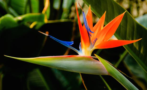 Fiori Uccelli Del Paradiso.Fiori Da Regalare A Un Amica Fiori Esotici Piante Da Giardino E