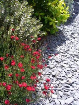 How to Plant and Grow a French Country Garden garden ideas Pinterest