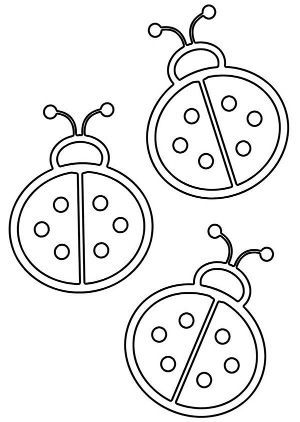 Lady Bug Outline Coloring Page