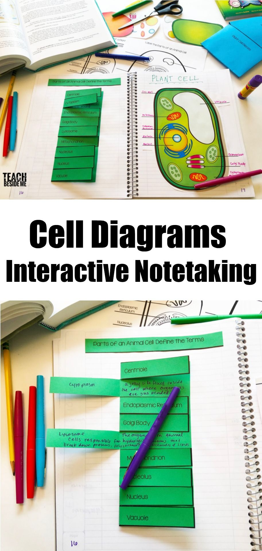 fun biology science teaching idea cell diagrams interactive note taking [ 913 x 1920 Pixel ]