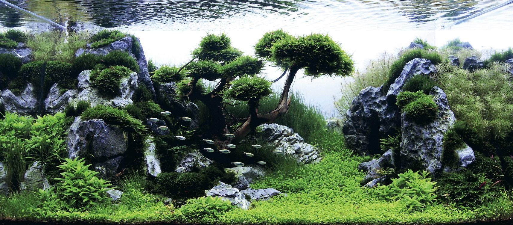 High Quality The Worldu0027s Largest Nature Aquarium And Aquatic Plants Layout Competition.