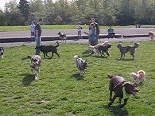 Dallas And Pals Off Leash Dog Walking Is Among The Companies That
