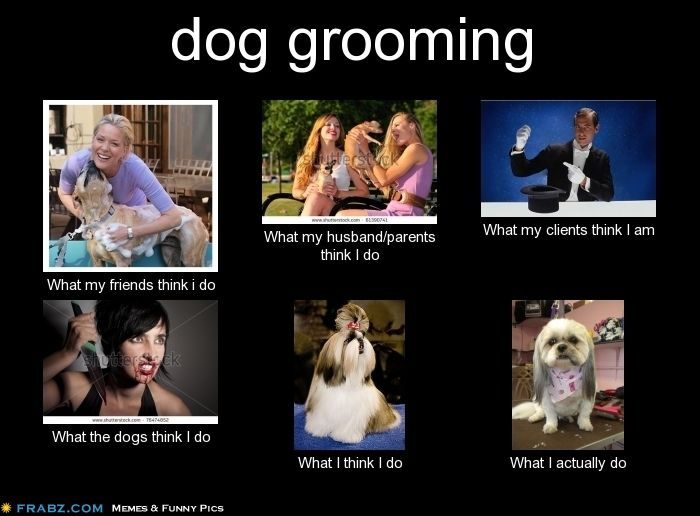 44c8d92eac459691bd64b3f944b01082 dog grooming meme generator what i do funny! dog grooming,What My Parents Think I Do Meme Maker