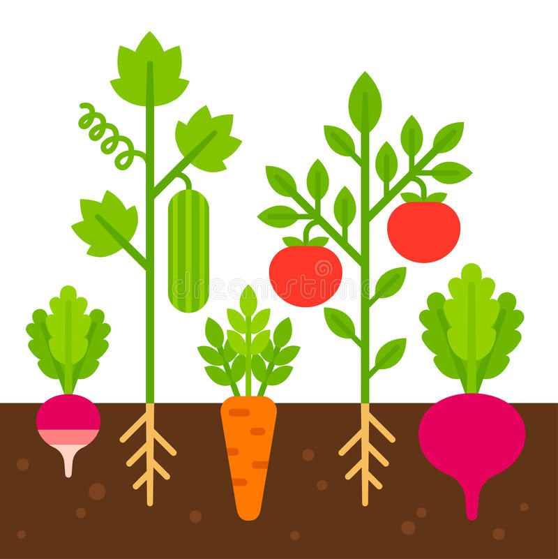 Photo about Vegetable garden, simple flat cartoon vector