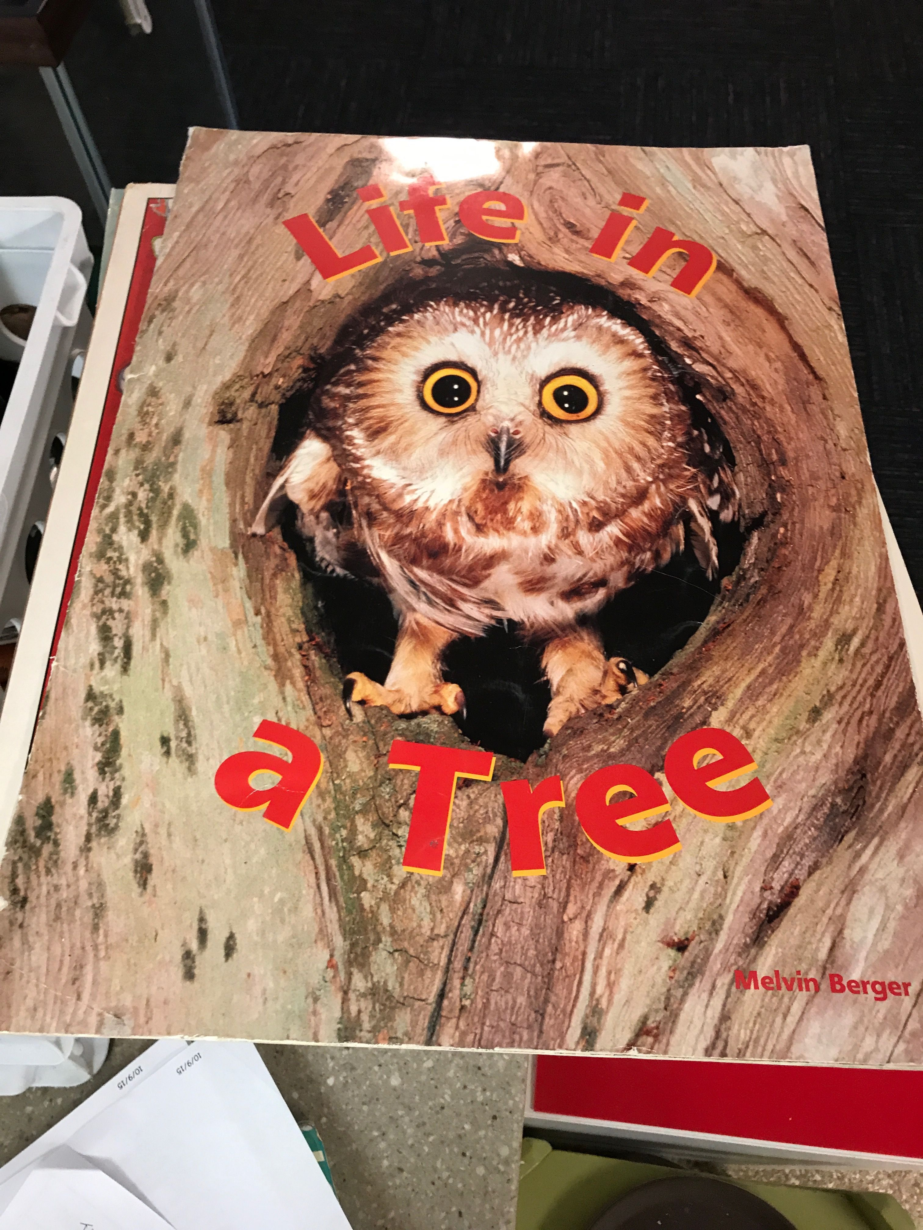 Pin by Megan Van Roekel on School trees Animals, Owl, Bird