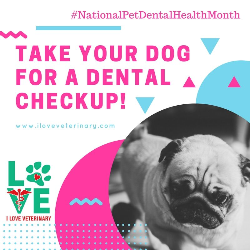 Happy National Pet Dental Health Month! (With images