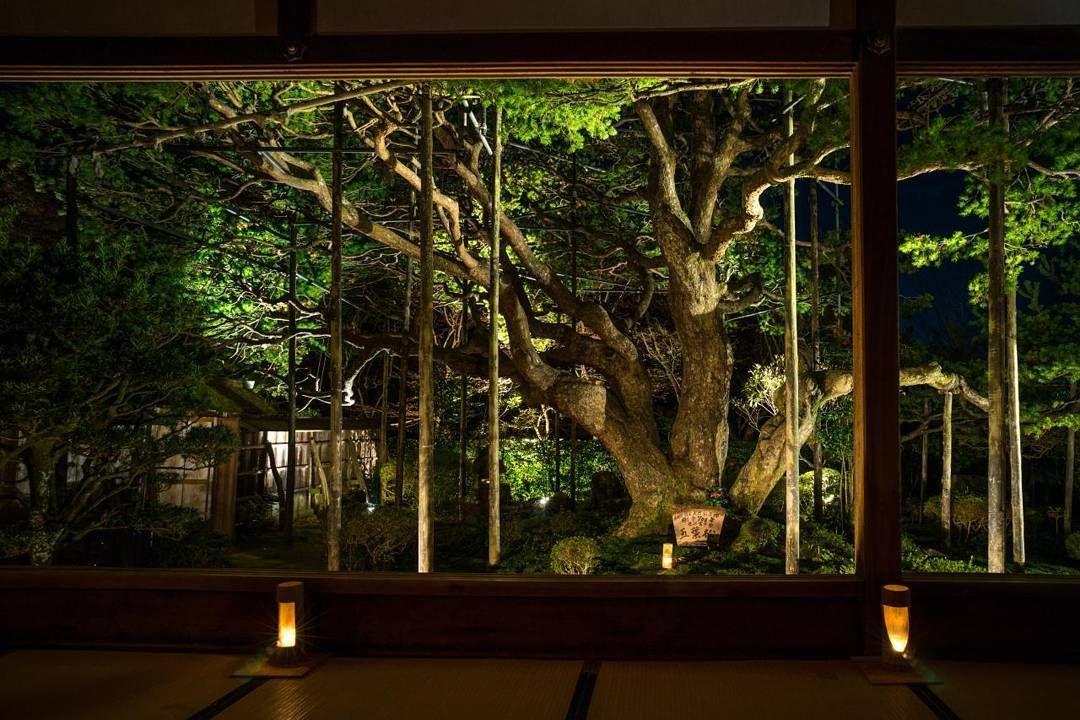 #Hosenin #finetree #national treasure #framed garden #Ohara #Kyoto #Japan #LeicaCamera #madeinwetzlar #교토 오하라호센인 #700년오엽송 #액자정원 #20151201