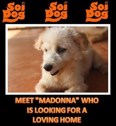 """""""Madonna"""" is not a material girl… https://www.facebook.com/photo.php?fbid=644393552269050&set=a.137025779672499.11141.108625789179165&type=1&theater"""