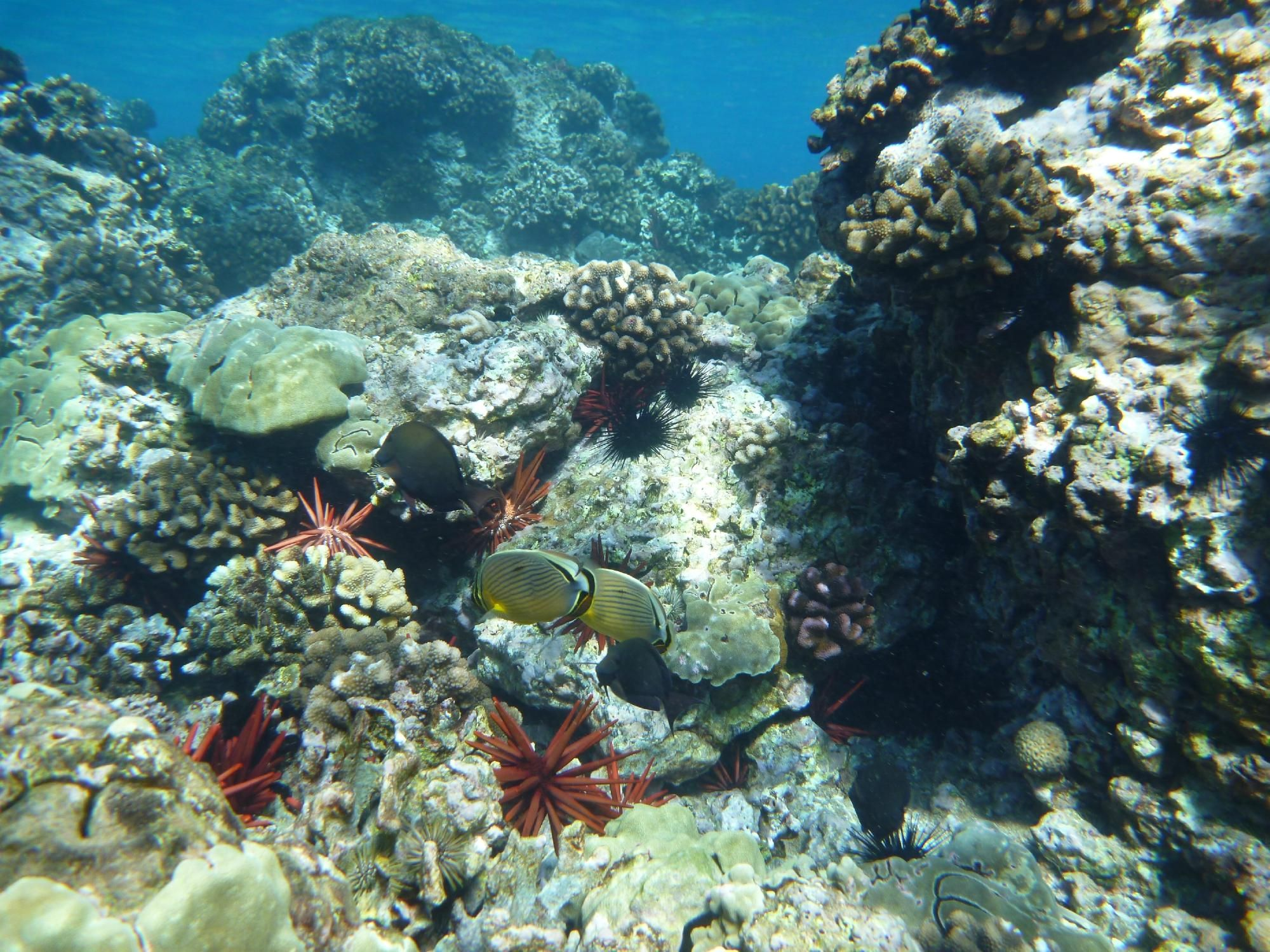 Maluaka Beach (Wailea, HI) on TripAdvisor: Address, Attraction Reviews