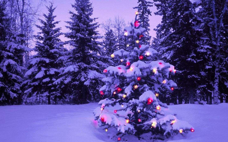 Snowy Christmas Christmas Desktop Christmas Tree Wallpaper Christmas Desktop Wallpaper